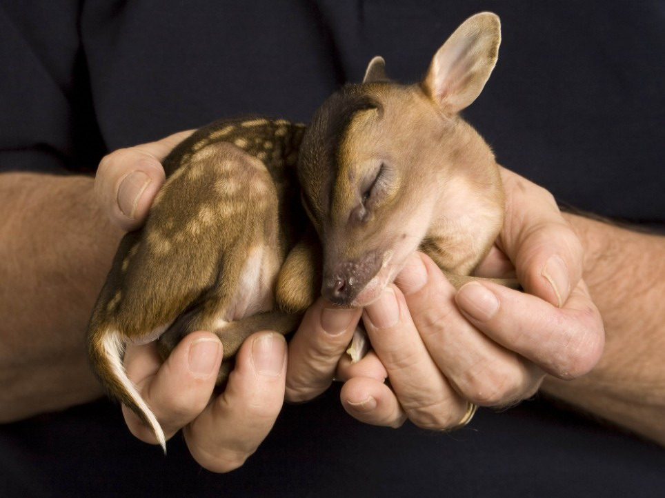 holding-a-fawn-big